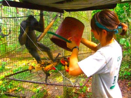 monkeyfeeding