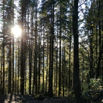 Between the trees comes the sun